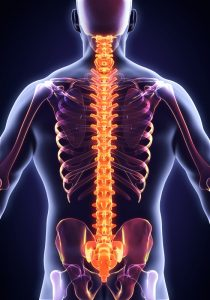 Our Ealing Chiropractor Helps You Understand Your Spine